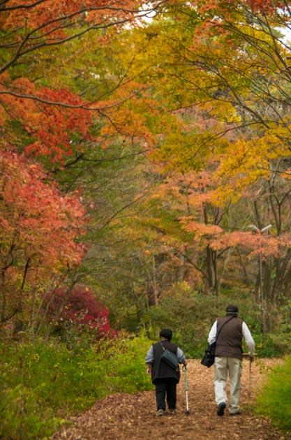 20141108赤城自然園03