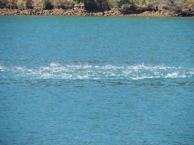 魚の群れ 2