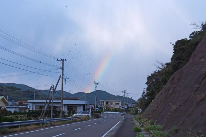 虹とカラスの群れ