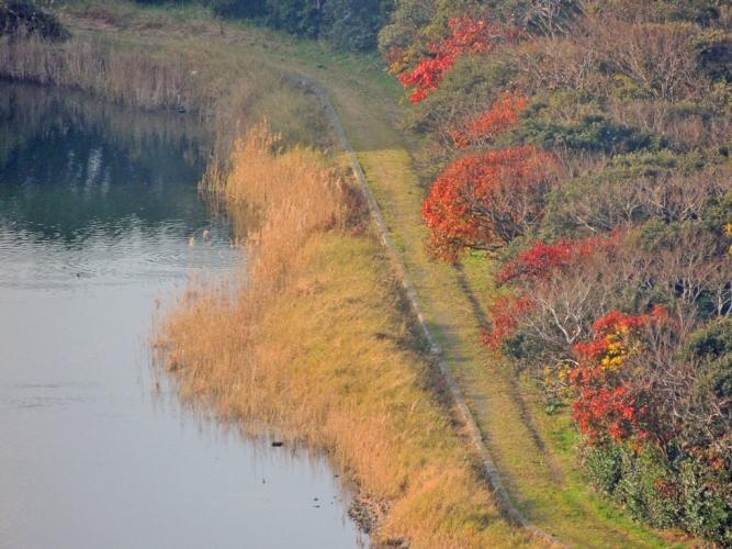 くわざき池の秋景色