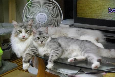 暑くてもしましま兄妹の仲良しは健在