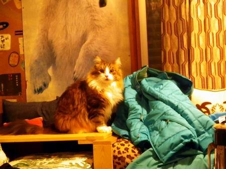 白馬の小屋で年越しのレオさん
