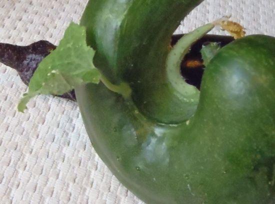 cucumber_1.jpg