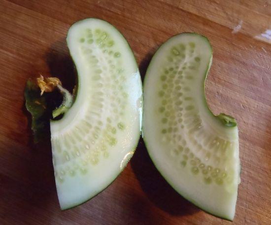 cucumber_3.jpg