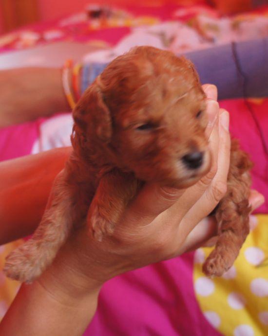 puppies_5.jpg
