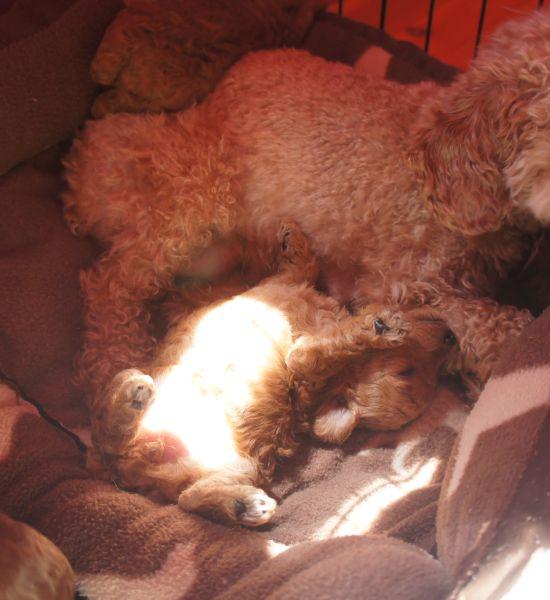 puppies_8.jpg