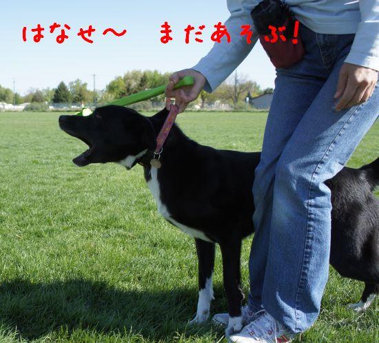 shimo_2.jpg