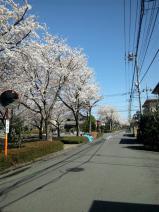 120413_sakura_002.jpg