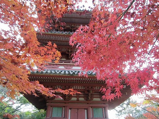 太山寺の紅葉《続編》(^^♪