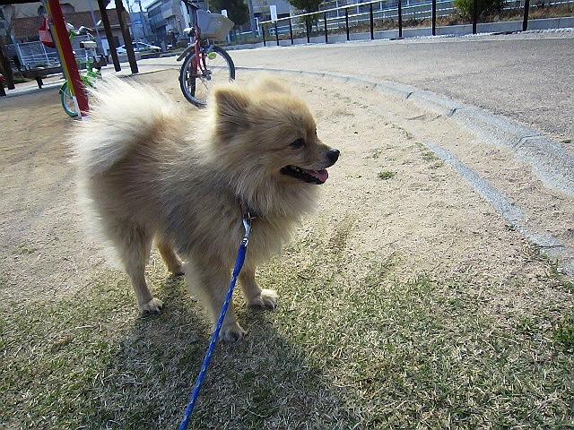 今朝のマール散歩。。