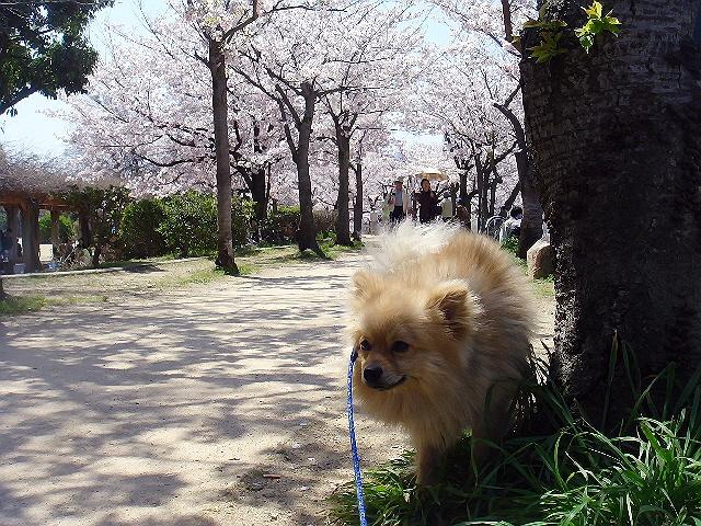 4月10日(日)はこじんまりと花見♪