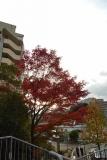 神戸市営住宅・ベルデ名谷 斜面に残る紅葉