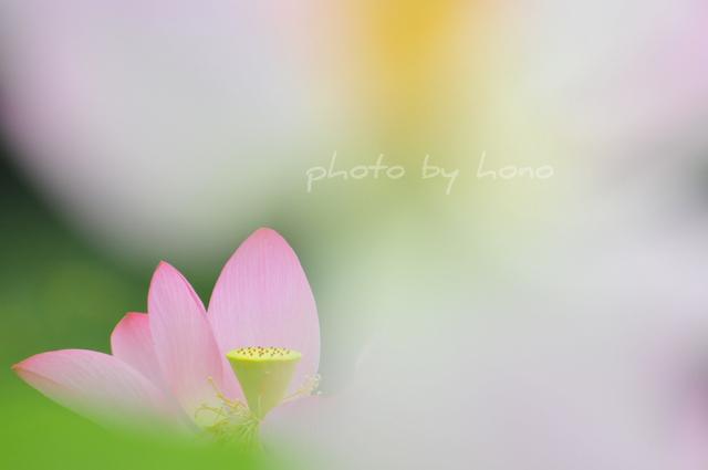 20100807-12.jpg