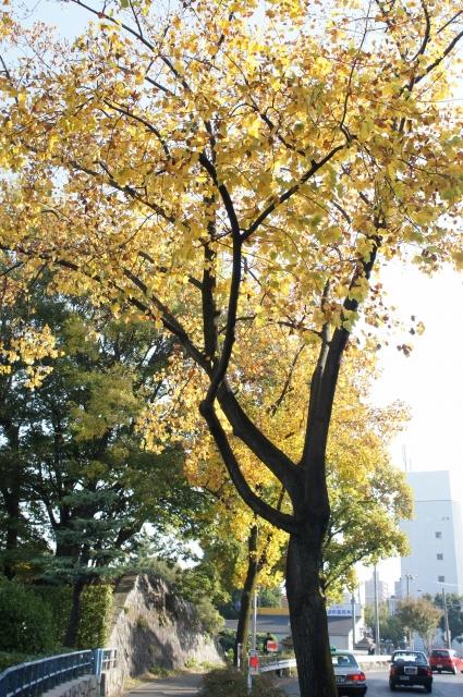 1_20121113221908.jpg