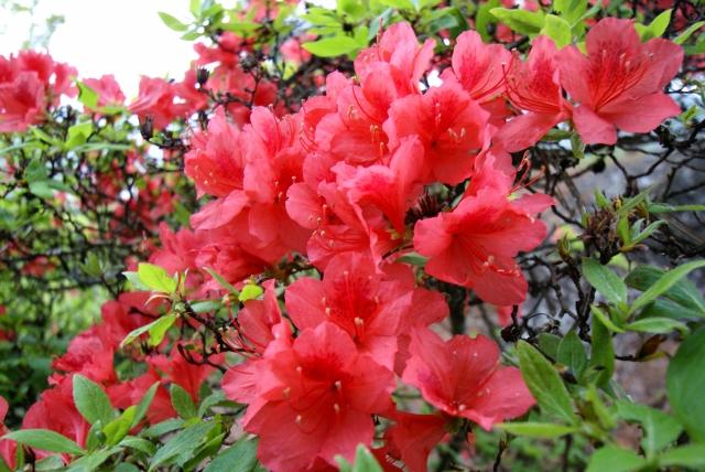 好きな場所で咲く好きな花