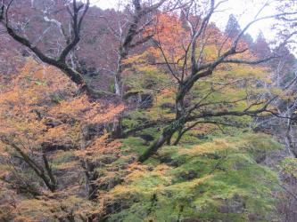 小田深山6