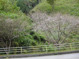 小田深山1