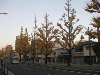城山の紅葉4