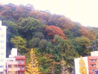 城山の紅葉2