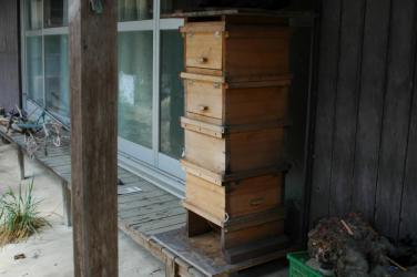 巣箱の移動3