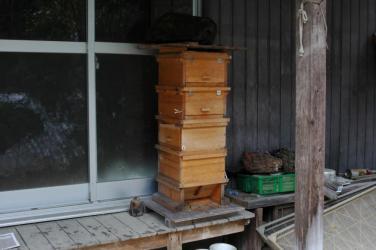 巣箱の移動1