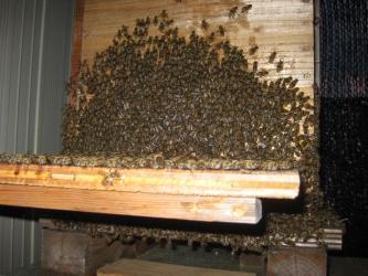 夜のミツバチ2