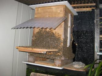 夜のミツバチ1