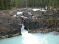 moose4-natural-bridge.jpg