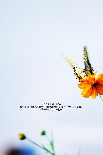 ageha_201312301047377fd.jpg