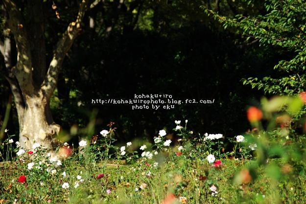 yono_20131230110846022.jpg