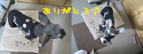 IMG_0206[1]