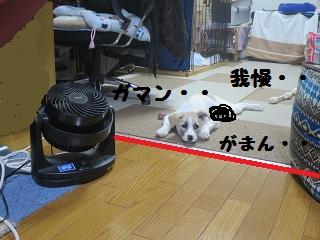 IMG_0298[1]