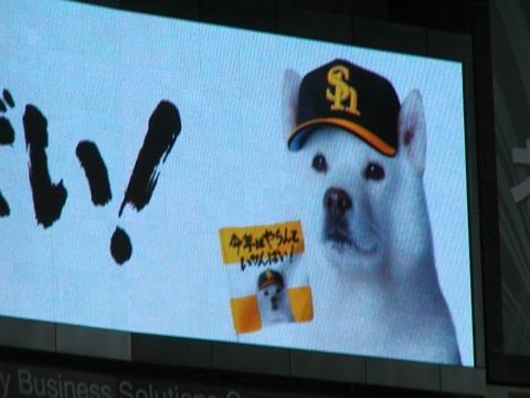 旧聞に属する話2010-お父さん犬
