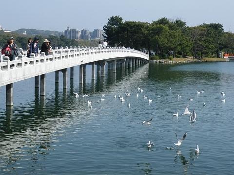 旧聞に属する話2011-大濠公園