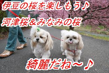 kawadu_20141029115817ae5.jpg