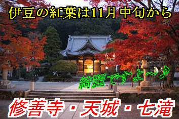 kouyo_20141029115753042.jpg