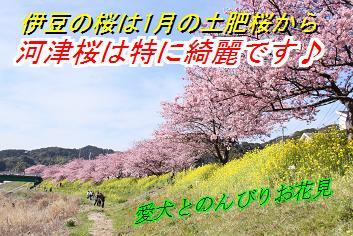 sakurasin_20141114014846634.jpg