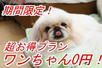 wan0en1_201411040149003b6.jpg