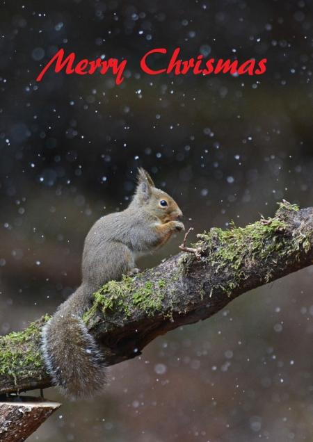 ニホンリスのクリスマス