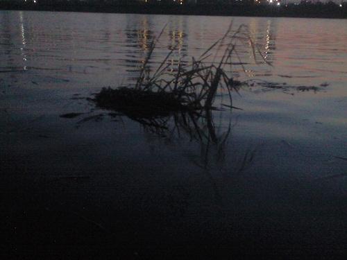 中川を流れるゴミ