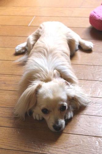 20110515モップ犬