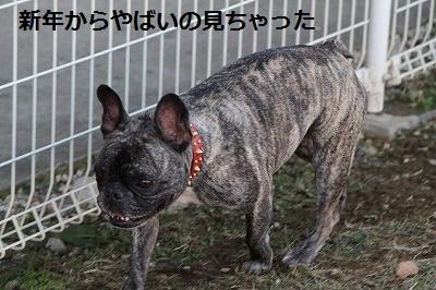 s-25IMG_4575.jpg
