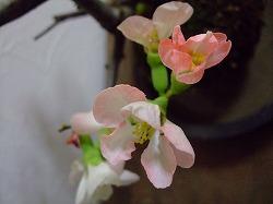2011_0228三日月豆0004