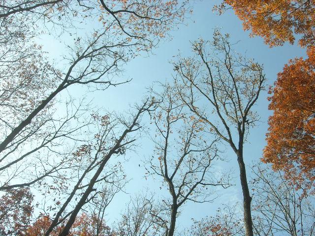 2010-11-14-2.jpg