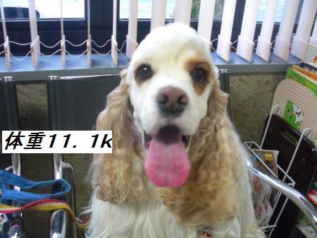 006_convert_20120222203503.jpg