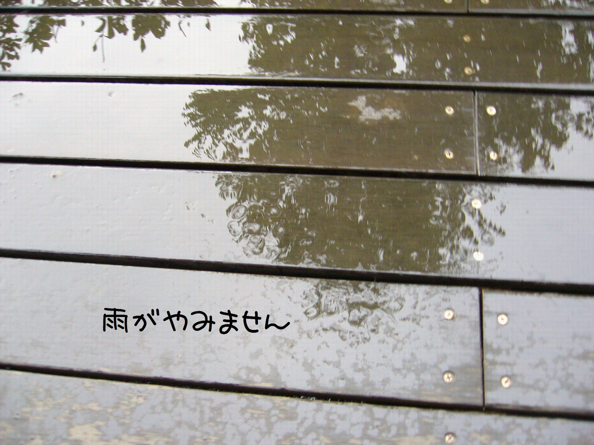 P1060209.jpg