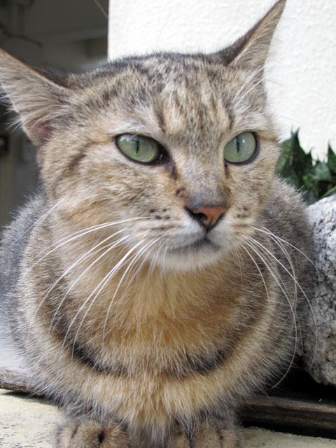 泉崎ロータリーの猫