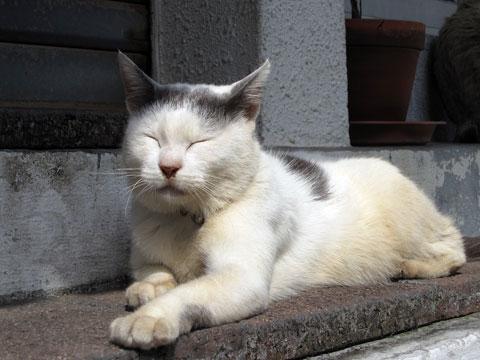 桜坂のまったり猫