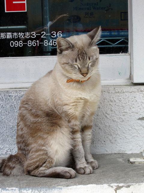 桜坂のまったり猫2