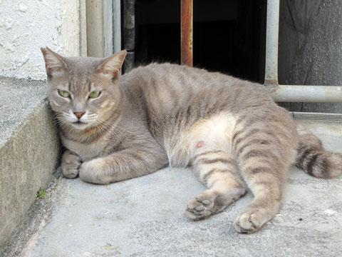 桜坂のまったり猫3